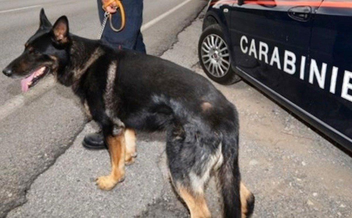 Carabinieri Cane AntiDroga