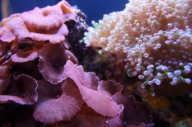 corallo-barriera-corallina