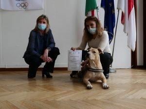 patentino-cani